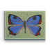 Colorado Butterfly Box Art - Colorado