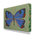 Colorado Butterfly Box Art - 1