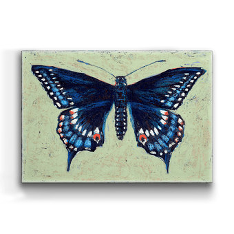 Black Swallowtail Box Art